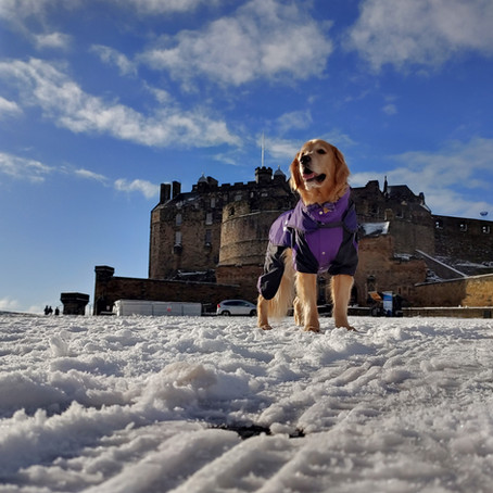 Sawyer's Snow Day in Edinburgh
