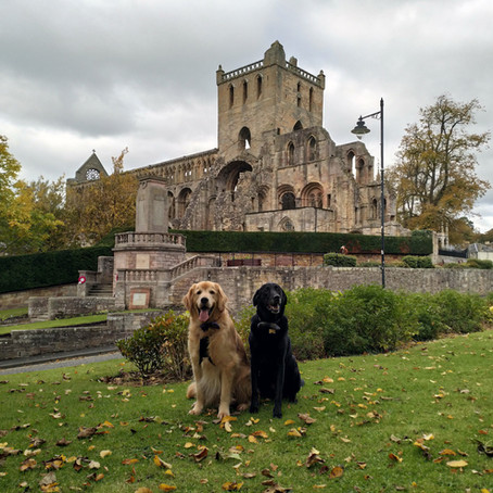 Jedburgh Abbey: from Augustinian Austerity to Gothic Elegance