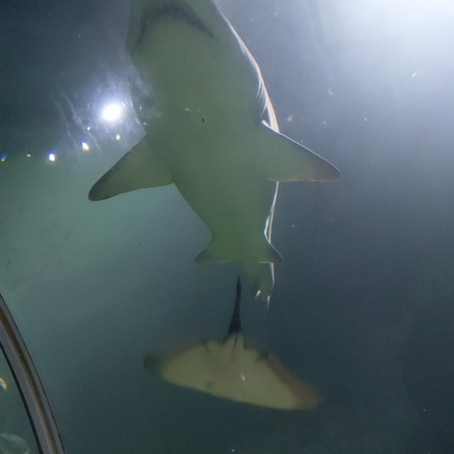 Exploring the Depths of Deep Sea World: Scotland's National Aquarium