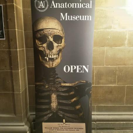 The Anatomical Museum: Edinburgh's Cabinet of Curiosities