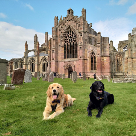 Melrose Abbey: Home to 'Beasts, Saints, and Sinners'