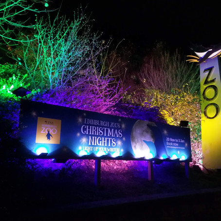 Edinburgh Zoo Shines the Way with 'Christmas Nights'