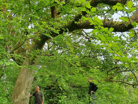 FFRWDDGAIN is a potential new woodland activity centre for men2men