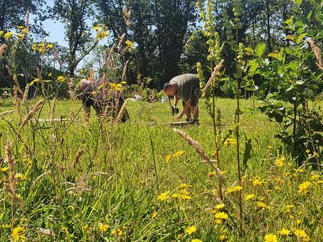 Ffrwdgain woodland therapy day