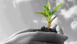 c'est une plante qui renaît, qui grandit grâce à l'hypnose