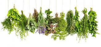 Se soigner par les Plantes, Oui mais Comment?