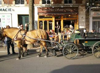 Rouen : Équibus, le transport scolaire à cheval