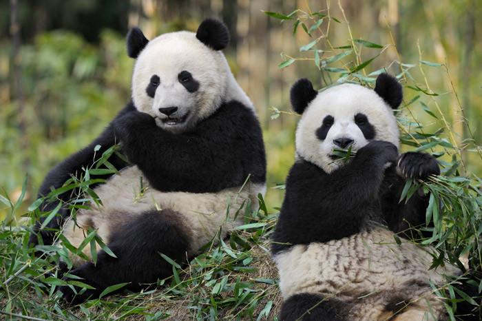 ZooParc de Beauval : un parcours de visite enrichi
