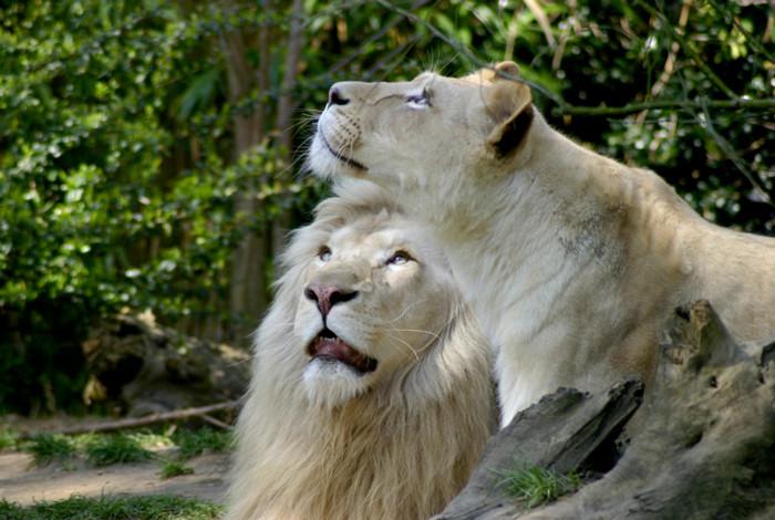 Le Zoo de La Flèche