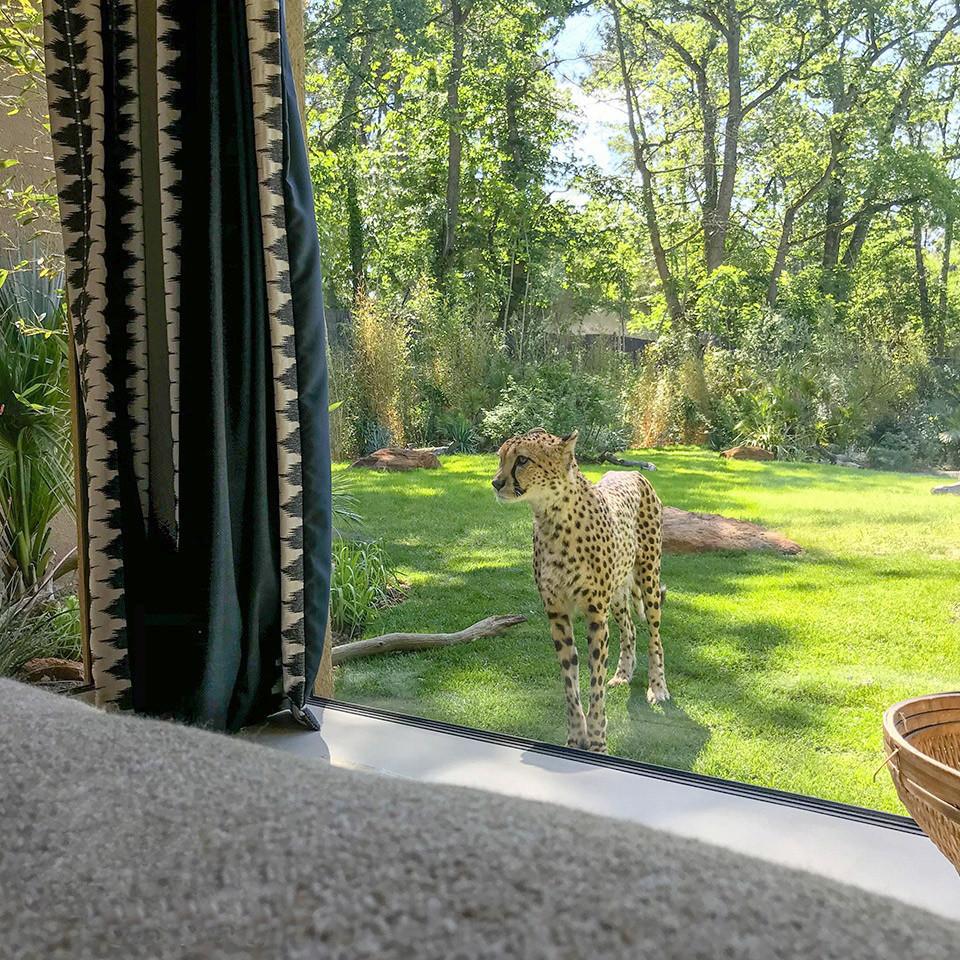 © Safari Lodge, Zoo de La Flèche.