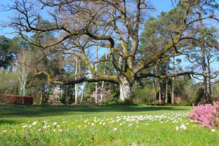 L'Arboretum des Grandes Bruyères se réveille