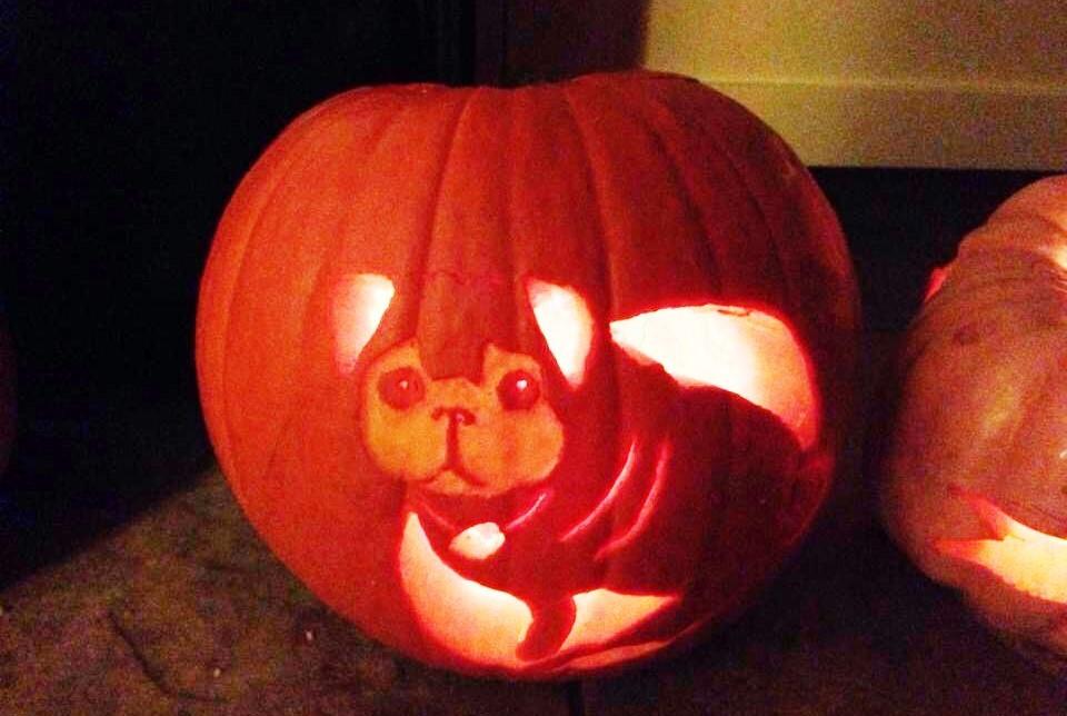 Pug Carved Pumpkin Jack O' Lantern