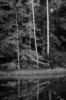 Trees and Water