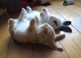 Глава 24 Спящая зайка Спит усталая заюшка приложив к подушки ушки.