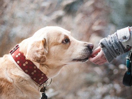 Emotional Support Animals and Seniors