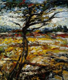 Bending Oak Tree and Wheat Field