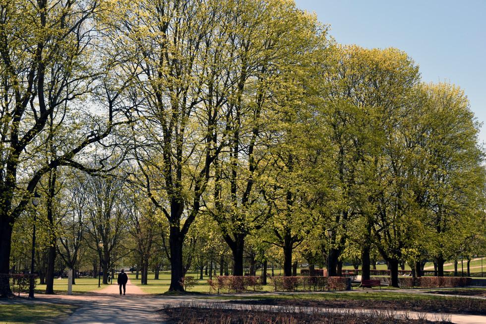 Oslo 3.jpg
