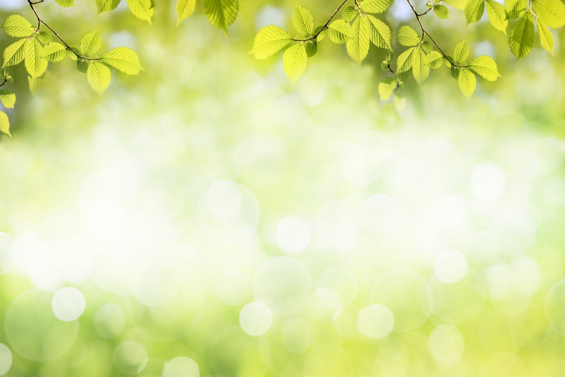 Fresh green tree leaves, frame. Natural