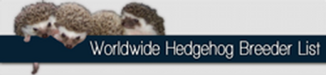 Hedgehogs For Sale In Michigan