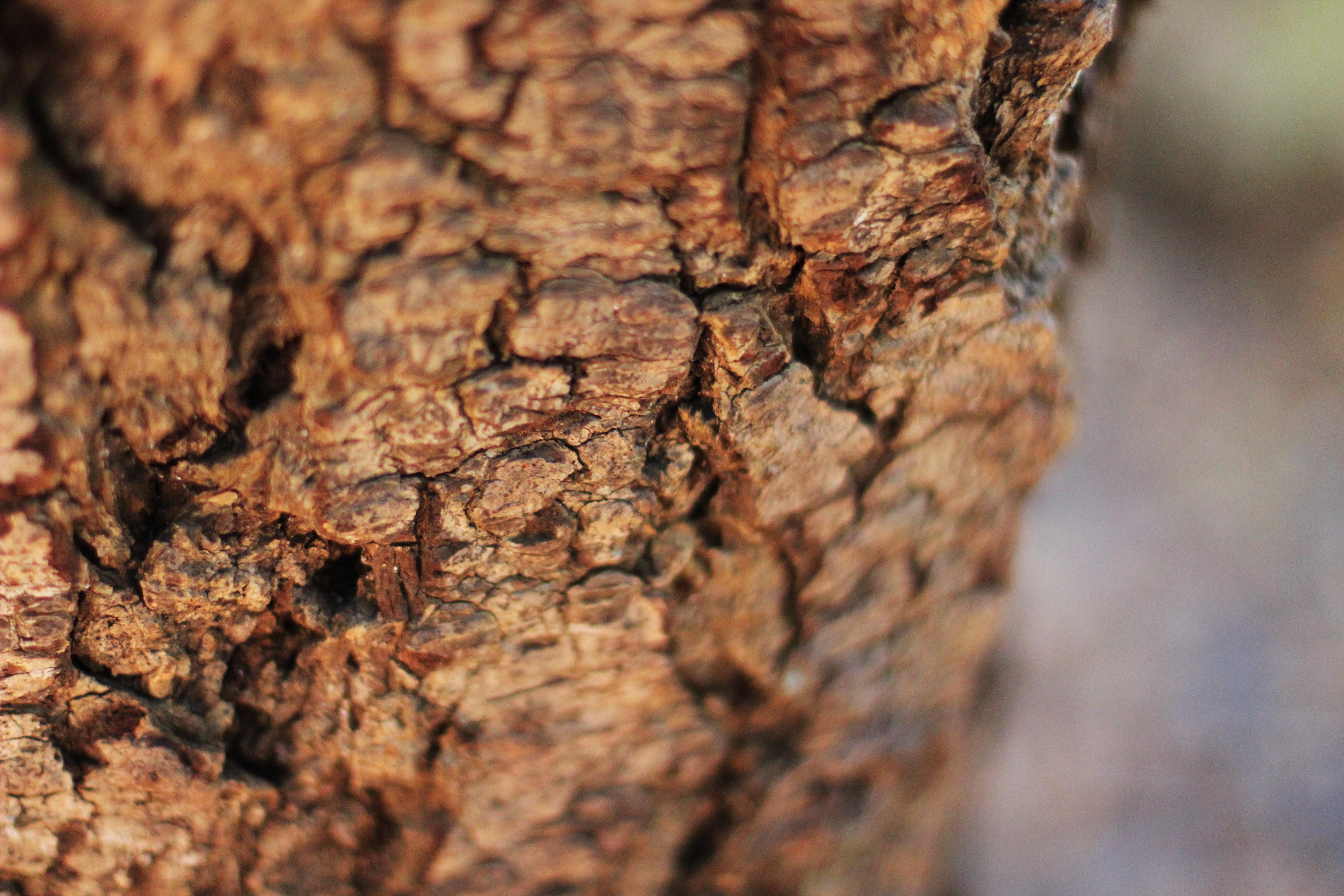 Bark at Muir