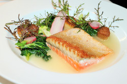 Steelhead Trout at Spruce