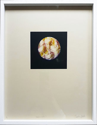 'Table Cloth 1' Photo Lithograph by Josephine Welsh