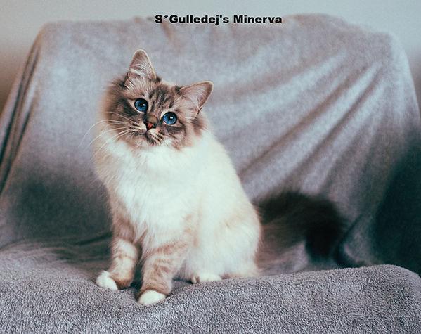 Minerva2_edited.jpg
