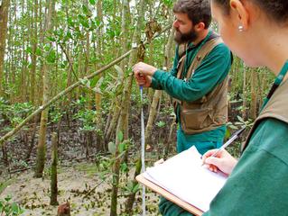 Áreas de manguezais são monitoradas no entorno dos portos