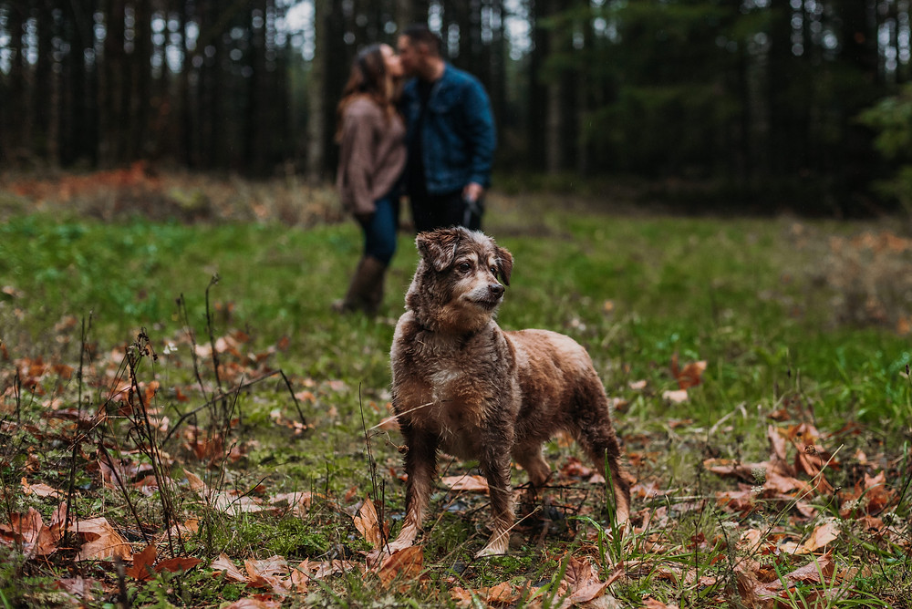 Couple with their dog during their Engagement session by Cherish Shanell Photography