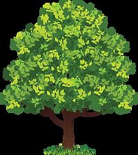 Лиственные и декоративные деревья