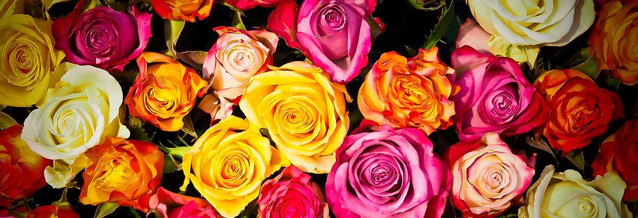 roses-1229148.jpg