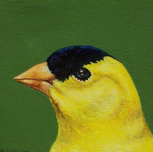 """Eastern Goldfinch"" Greeting Card"