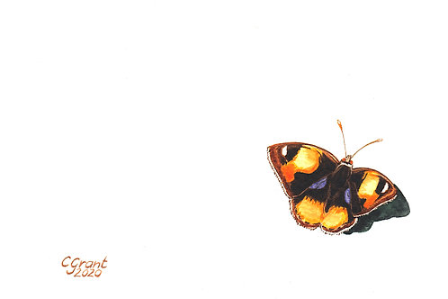 Yellow Pansy (physical)