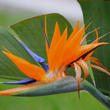 Photos - Plants