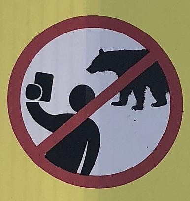 no-bear-selfies.jpg
