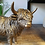 Thumbnail: Bronzed Effect Reflections Highland Cow Ornament
