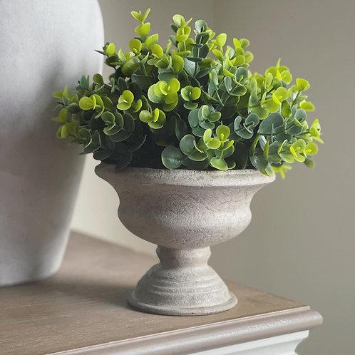 Faux Sage Plant in Cement style Pot