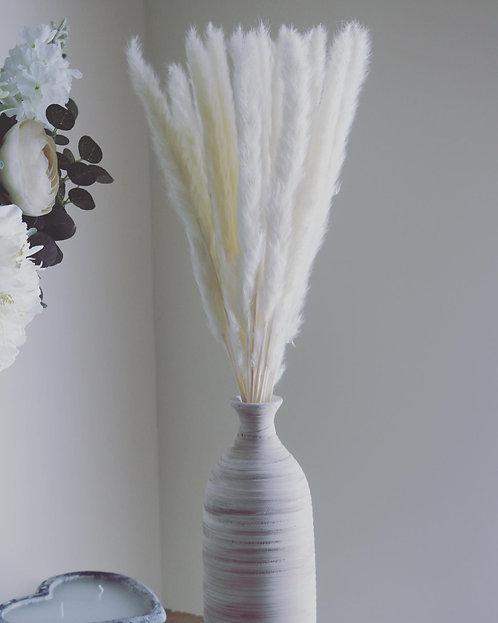 Mini White Pampas Grass Bunch Of 15