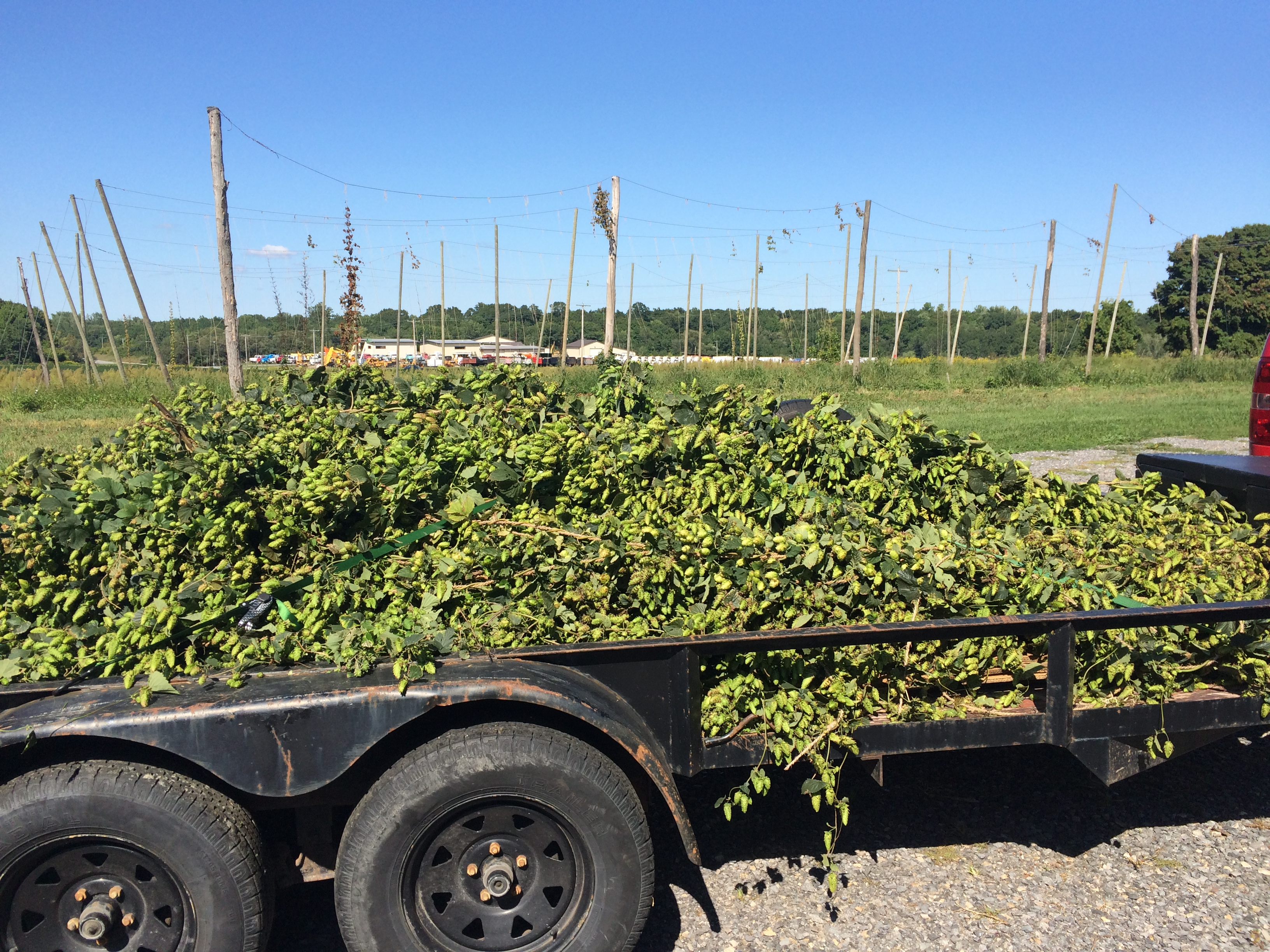 Wagon Load of Hops