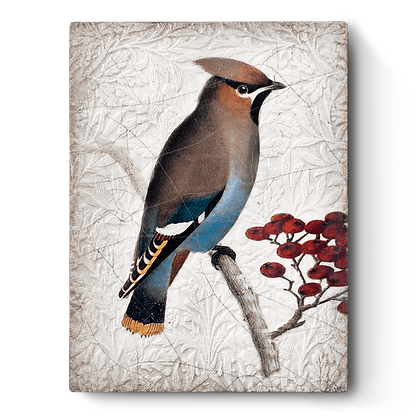 Waxwing - T485