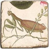 Single Marble Coaster- Mantis