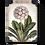 Thumbnail: First Bloom- T460- Retiring Soon