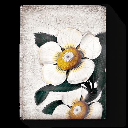 White Blossoms- T487