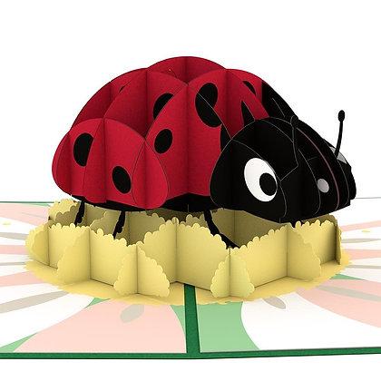 Ladybug Pop Up Card