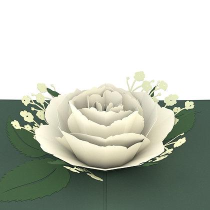 White Rose Bloom Pop Up Card