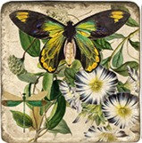 Single Marble Coaster- Butterfly with Petunia
