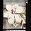 Thumbnail: Magnolia - T301