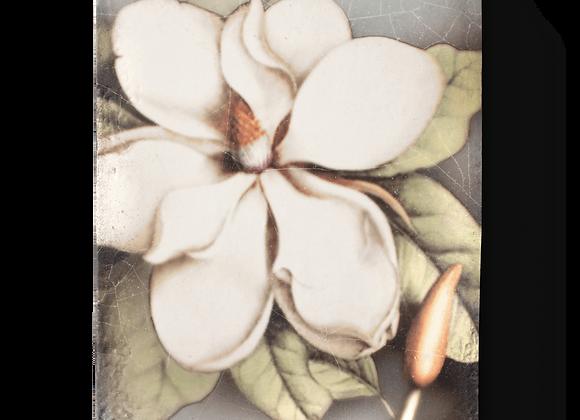 Magnolia - T301