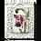 Thumbnail: Lotus- AT68- Retired