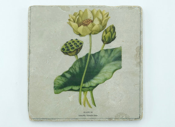 Single Marble Coaster- Lotus Lily